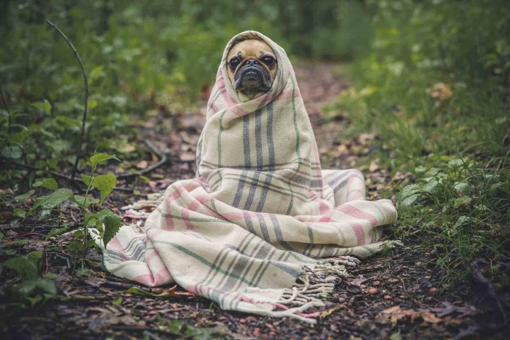 What's your storm plan for your pets?